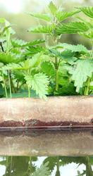 Foto plaatselijke planten met veedrinkbak