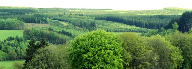 Photo of a green valley